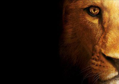 lion-half-face